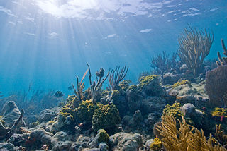 This is an underwater picture of a reef at Biscayne National Park.