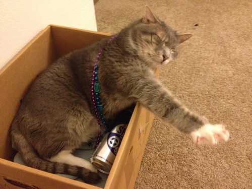 This is a picture of my cat Disco in a box wearing Mardi Gras beads and lying on top of an empty beer can.