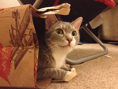 This is a side view of Disco in a Trader Joe's paper grocery bag. He is staring off into the distance as if some critter is daring to invade his territory.